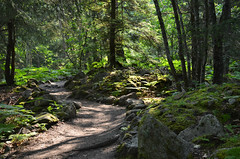 (aulivjus) Tags: trees nature alaska outdoors nikon skagway 4thofjuly independenceday goldrushcemetery