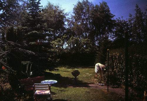 "Kronshagen Garten (19) • <a style=""font-size:0.8em;"" href=""http://www.flickr.com/photos/69570948@N04/19283902248/"" target=""_blank"">View on Flickr</a>"