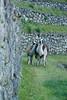 Peru-0701.jpg (Matt and Debbie) Tags: peru inca llama trail 2015 wayna winaywayna winay