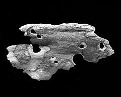 IMG_4982 - Version 2 (j.towbin ) Tags: bw macro texture nature faces holes bark minimalsim allrightsreserved