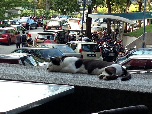 A cat   in Pasar Raya Ali Shopping Centre