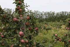 Alitalon Omenaviinitila (visitsouthcoastfinland) Tags: apple suomi finland landscape vineyard maisema lohja applewine omena viinitila lnsiuusimaa lohjansaari visitsouthcoastfinland alitalo omenaviini