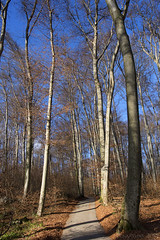 winter walk on Kapuzinerberg hill - HTT! (lunaryuna) Tags: austria salzburg urbannature kapuzinerberg hill forest woods trees wintersun path walkinthewoods thelightfantastic growingtall nature beauty winter season seasonalchange treemendoustuesday lunaryuna