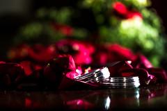(DeBonito) Tags: canon t5i 700d aliança alliance rosa rose flor flower