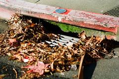 (Casey Lombardo) Tags: sananselmo sananselmoca marincounty kodak kodakfilm kodakgold kodakgold200 film filmphotography filmgrain filmscans colornegative colorfilm minoltasrt101 58mm gutter gutters leaves trash moss mossy curb sidewalk street