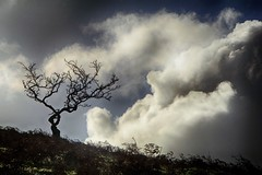 Bicknoller Hill cloudscape (OutdoorMonkey) Tags: cloud cloudscape tree silhouette bicknollerhill quantocks quantockhills somerset hill hillside hilltop sky skyscape dramatic