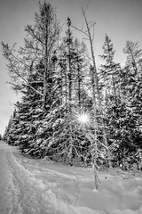 Natural Beauty (Cindy's Here) Tags: sun sunburst trees trails millsbrookforest snow winter thunderbay ontario canada canon natural bw