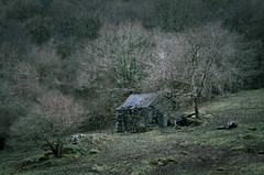 Surrounded (Photo Lab by Ross Farnham) Tags: wales snowdonia desolate abandoned sony a7rii 70200mm trees