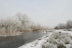 Winterlandschap. (Geziena) Tags: wintersplaatje winters winter cold vorst rijp vriezen wit water olympus omdem1 1240mm bruggetje sfeer