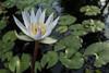 New York Botanical Garden (danperezfilms) Tags: enidahauptconservatory newyorkbotanicalgarden newyork bronx flower flowers nature gh4 flora
