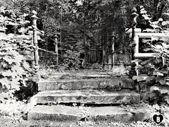 GEHEIMNISVOLLES TOR  #mysteriös #geheimnisvoll #mystery #gate #Tor #blackandwhite #schwarzweiß #photography #Photographie (benicturesblackwhite) Tags: blackandwhite tor gate geheimnisvoll mysteriös mystery photography schwarzweis photographie