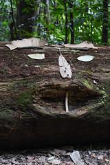 DSC_3097 (olyaterekhova) Tags: nature singapore bukit timah park