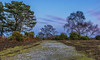 Rockford Moonrise (nicklucas2) Tags: landscape newforest nature heather bracken heath path tree woods moon cloud