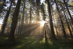 Carpe Diem (Hector Prada) Tags: bosque niebla rayos sol mañana magia naturaleza paisaje vida luz momento forest fog sunbeams magic nature freedom light sun morning mist hectorprada