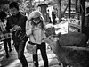 Nara - Japan (-Faisal Aljunied-) Tags: blackandwhitestreet streetphotography deers japan nara ricohgr faisalaljunied
