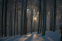 beech forest in winter (lucafabbricesena) Tags: woods beech forest winter snow emiliaromagna montefumaiolo sunset twilight italy