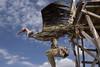 Condor y pescado, Islas flotantes de los Uros, lago Titicaca