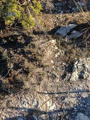 Speckles ([S u m m i t] s c a p e) Tags: australia bushwalking newsouthwales megalong narrowneckplateau ubmbc
