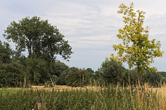 Urdenbacher Kmpe Juni 2015 / II (KL57Foto) Tags: trees summer nature pen germany sommer meadows olympus dsseldorf rhineland rheinaue aue auenlandschaft 2015 floodplain urdenbach baumberger urdenbacherkmpe kmpe urdenbacher epm2 kl57foto dsseldorfurdenbach