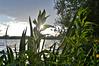 Aquadrome (Joseph.Monk.Photography) Tags: lake nature landscape nikon rickmansworth nikond3200 aquadrome d3200