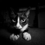 A cat in the dark thumbnail