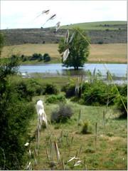 En las hoces del Riaza. (margabel2010) Tags: paisajes ro rboles vistas ros campos riaza airelibre prados cieloytierra praderas hocesdelriaza paisajesfluviales