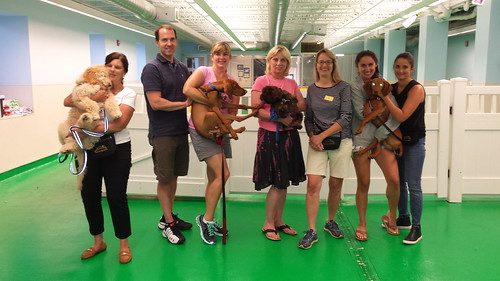 "Puppy Head Start, Session I, Summer 2015-Tues; Class photo • <a style=""font-size:0.8em;"" href=""http://www.flickr.com/photos/65918608@N08/19747099464/"" target=""_blank"">View on Flickr</a>"