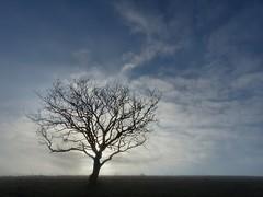 Winter light (sunset1uk) Tags: southdowns tree silhouette sky devilsdyke eastsussex england