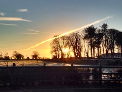 Frosty Sunrise (JulieK (thanks for 7 million views)) Tags: 2017onephotoeachday sunrise wexford ireland irish fence frosty winter field rural trees rookery iphone5 silhouette contrail 117picturesin2017