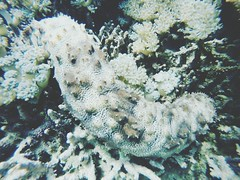 Underwater Sea Life UnderSea Coral Animals In The Wild Sea Nature No People Beauty In Nature Ecosystem  Water Animal Themes Close-up Day (scubasurf_lombok) Tags: underwater sealife undersea coral animalsinthewild sea nature nopeople beautyinnature ecosystem water animalthemes closeup day