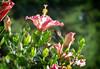 Chlorostilbon lucidus ♂ (GaboUruguay) Tags: picaflorcomún esmeraldaventidorada esmeraldaventridorada picaflorverdecomún beijaflorbesourinhodebicovermelho beijaflordebicovermelho besourinhodebicovemelho besourinhodebicovermelho esmeraldadebicovermelho colibrìsmeraldoventredorato smeraldopancialuccicante hummingbird colibri picaflor flor flower animalia chordata aves apodiformes trochilidae zumbadores colibrí colibríes quindes tucusitos picaflores chupamirtos chuparrosas huitsitsili mainumby guanumby salinas canelones animal ave pajaro bird rare exotic green metallic común esmeralda ventidorada ventridorada fauna anifeiliaid animale annimali anụmanụ besto bèt biby chinyama dabba dier dierlijk djur vật dýr dzīvnieks eläin eranko gyvūnas haiwan kafshë kararehe kewan loom emeraude splendide uruguay autofocus