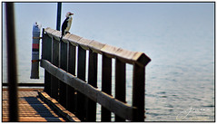 Water Views (juliewilliams11) Tags: outdoor pageborder smoke jetty bird cormorant newsouthwales portstephens australia water