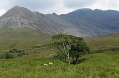 The Cuillin (Begoña Fernández) Tags: sgurrnabanachdich cuillinhills cuillin glenbrittle skye scotland eskozia escocia nahalba alba scottishhighlands highlands coirelagan