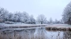 Winter landscape (Wouter de Bruijn) Tags: fujifilm xt1 fujinonxf35mmf14r winter snow ice frozen frost hoarfrost ripe nature landscape middelburg bolwerk walcheren zeeland nederland netherlands holland dutch water reeds trees outdoor