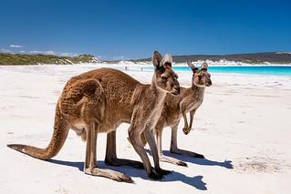 Beach Buddys