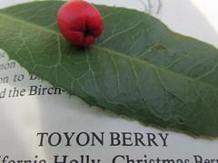 Toyon berry (AnkaKarewicz) Tags: toyon berry