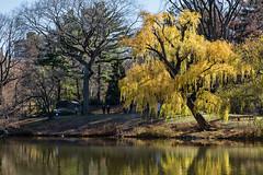 December in the Park (Bob90901) Tags: december park centralpark newyork autumn morning manhattan rpg90901 bethesdaterrace newyorkcity canon 6d canonef24105mmf4lisusm 2016 1134