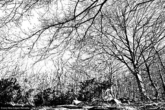 Bosque - Forest · Santa Fe del Montseny, Barcelona (Ana López Heredia) Tags: analópezheredia canoneos600d canon eos 600d tamron18270mmf3563diiivcpzd tamron santafe santafedelmontseny montseny barcelona hayas haya hayedo bosque forest tree árboles ramas quimas blancoynegro blackandwhite black blanco white negro bw