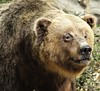 Grizzly Bear (Stuffed) - Cabelas Buda Texas (Gilli8888) Tags: austin texas usa bear grizzlybear cabelas stuffedanimal taxidermy mammal animal display buda