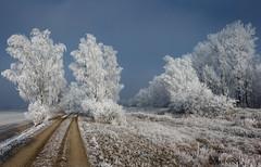frosted trees (drummerwinger) Tags: rot frost bäume canon700d oce cold kalt winter gaden erding wald gebüsch reif schnee weg