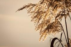 Let the Sunshine (Pierrotg2g) Tags: sunset lumière light nikon d90 tamron 70200 f28