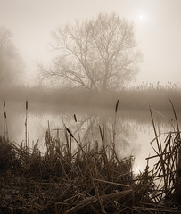 Morning Fog, Buscot (mistymornings99) Tags: sun thames landscape river rushes time buscot photostyles weather mist