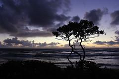 Nukoli'i Beach Sunrise (russ david) Tags: nukolii beach sunrise kauai september 2016 hawaii hi pacific ocean silhouette ハワイ 風景