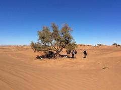 Un thé au Sahara: bivouac dans les dunes (Des Goûts et des Couleurs) Tags: maroc sahara morocco desert mhamid orange bleu blue ciel dune dunes liberté calme silence isolement dromadaires caravanes bédouins aventure