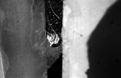 扉 (door) (Dinasty_Oomae) Tags: voigtlaender フォクトレンダー ヴィトマチック vitomatic blackandwhite bw monochrome blackwhite 白黒 白黒写真 outdoor 千葉県 千葉市 千葉 chiba 神社 shrine 千葉神社 chibashrine 猫 ネコ ぬこ cat