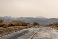 Rain in Pinto Basin Area 7/1/15 (Joshua Tree National Park) Tags: rain desert joshuatree joshuatreenationalpark pintobasin