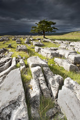 Winskill Stones and Tree (Peter Bindon) Tags: park tree yorkshire national limestone lone dales settle langcliffe winskill