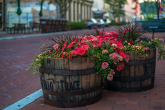 Frankfort, KY (rvtn) Tags: city pink flowers kentucky barrel petunia frankfort buffalotrace