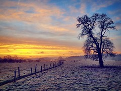 Freezing Morning (Ben Heine) Tags: benheinephotography photography freeze color winter cook today tree sky morning nature silhouette frozen sunrise crisp crispy composition samsung s7 ownthetwilight beauty beautiful colors colorful frosty gel gelé ice