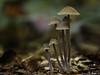 haarig (Oly User) Tags: 60mmf28macro billerbeck herbst makro natur november2016 omdem1 olympus pilze thomasmeinersmann macro unlimited
